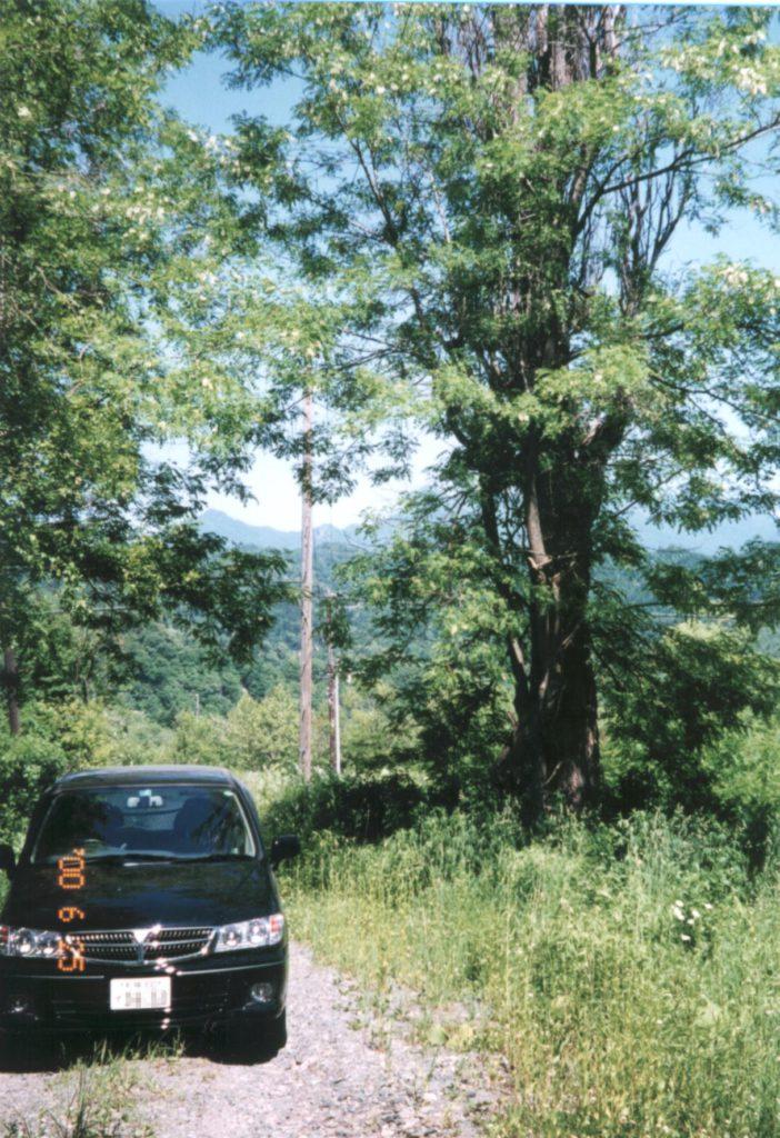 僕と木(2000年6月25日)|飯田雅人