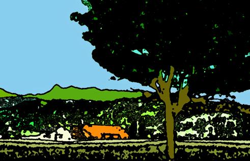 イタヤカエデの木の下で 夕輝文敏