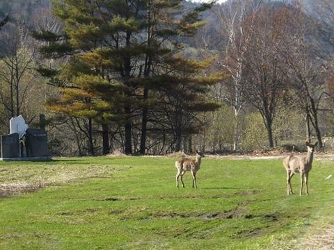 鹿島小学校グラウンドの鹿|高橋歌子